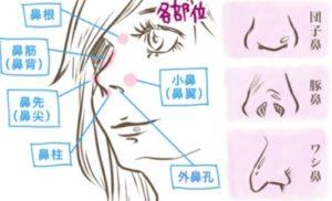 鼻の各部位の骨
